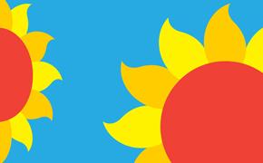 sunflowwer_thumb